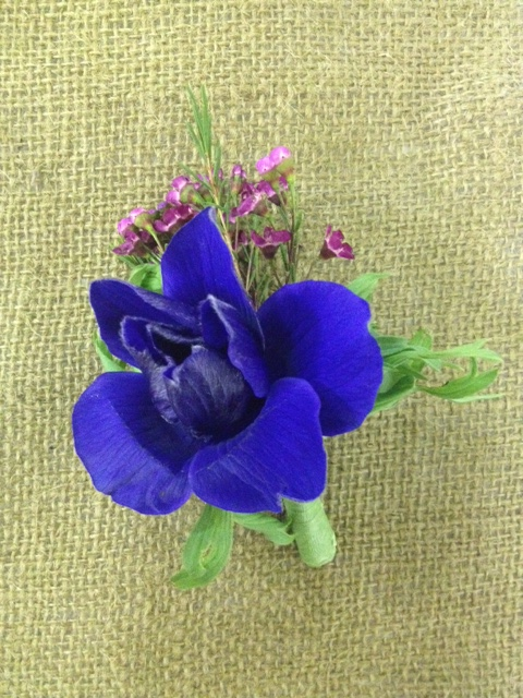 A gorgeous blue anemone will complement any man's complexion, and the hot pink waxflower makes the color pop.